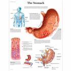 VR1426UU_01_140_140_The-Stomach-Chart